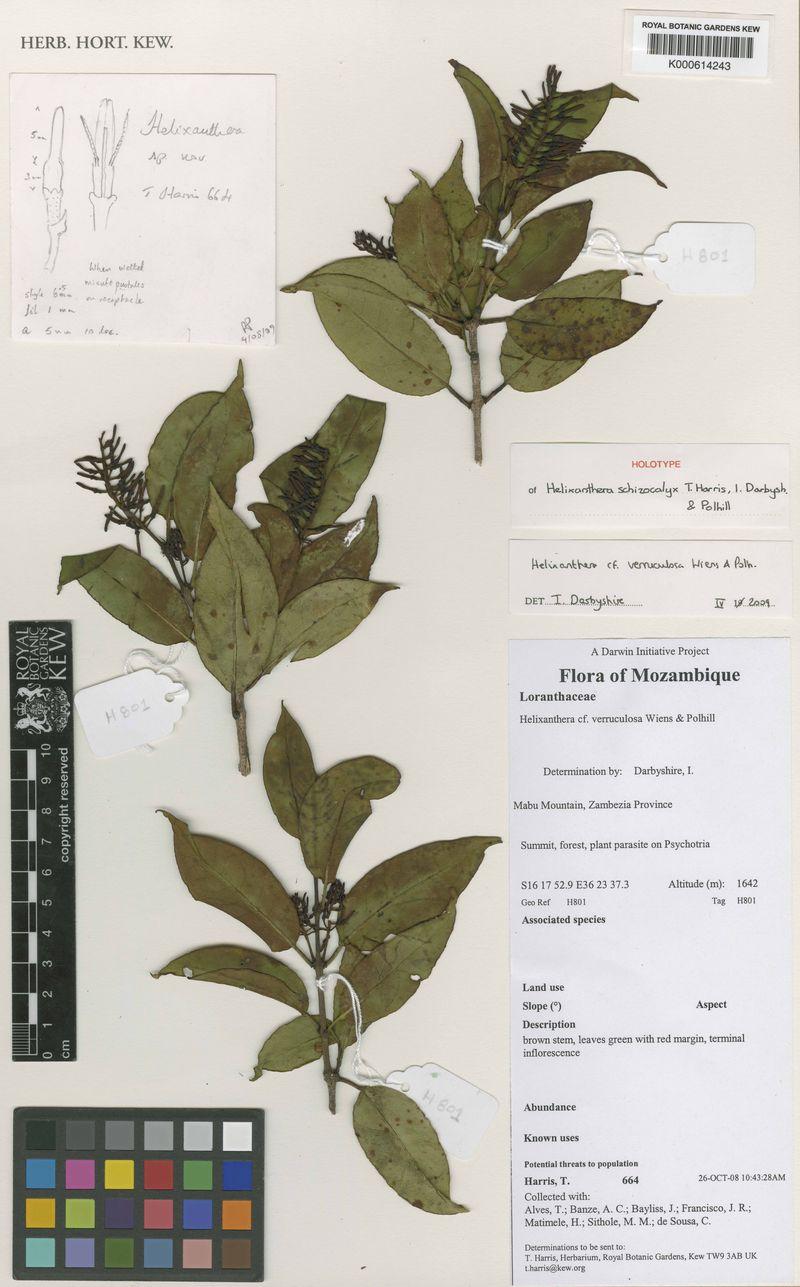 Constantine Alexander's Journal: Biodiversity