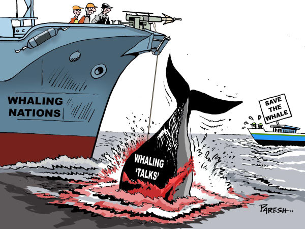 Killing Whales
