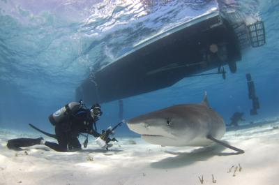 Sharks and Ecotourism