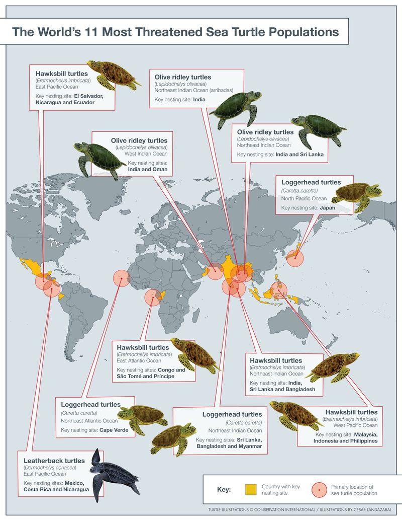 World Threatened Sea Turtle Populations Map