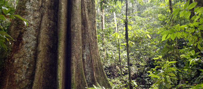 Sustainable use of forests