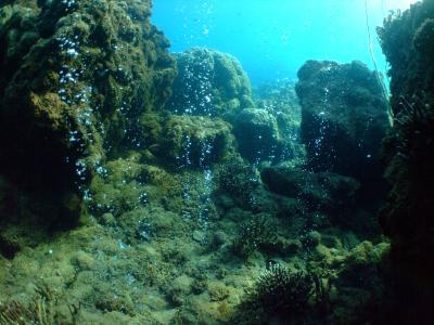 Champagne Reefs