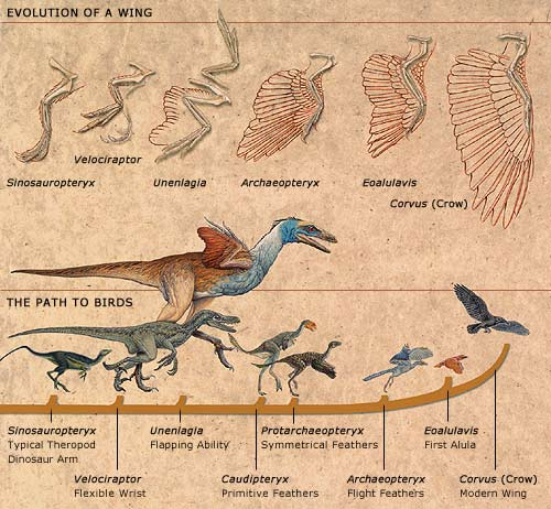 Image result for dinosaur change to bird