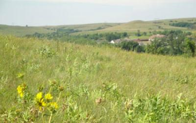 Prairie Grass and Wildflowers