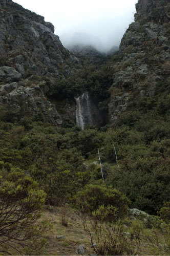 Polylepis forests in the southern Peruvian Andes