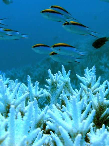 Coral and mollusc responses to acidified oceans