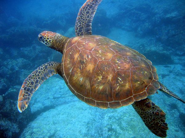 Nesting Site Protection Key To Save Turtles From Climate