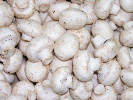 Adaptable button mushroom serves up genes critical to managing the