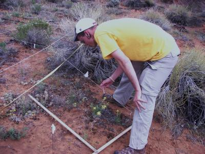 Sampling Vegetation