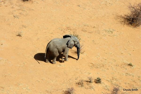 Mali Elephant