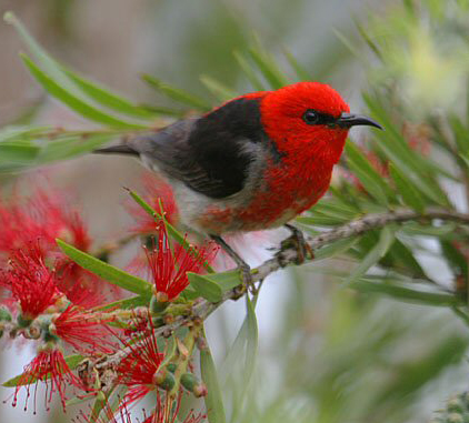 For Birds Red Means Go Constantine Alexander S Journal