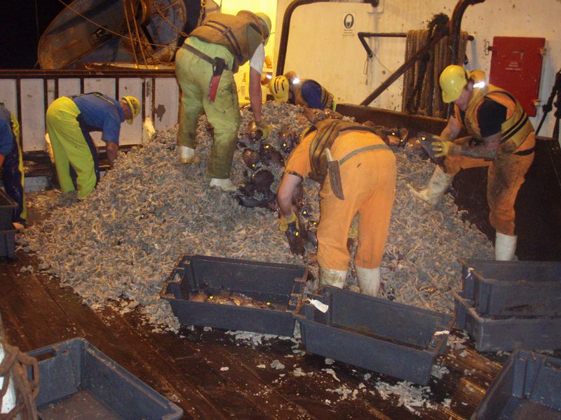 4. Deep sea trawling Photo - Crown New Zealand government