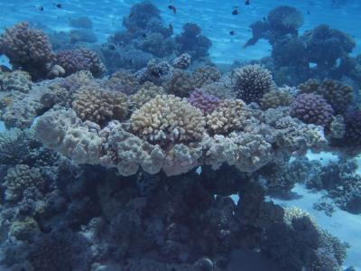 Different Marine Species
