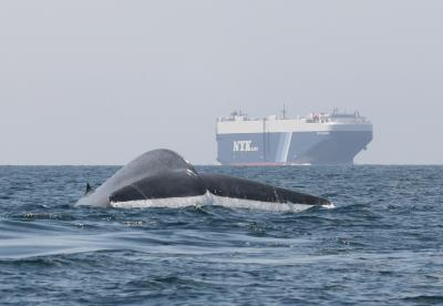 Blue Whale and Ship