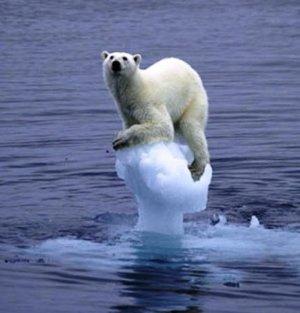 Polar-bear-on-arctic-ice