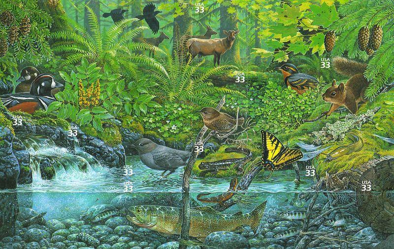 biodiversity rainforest -#main