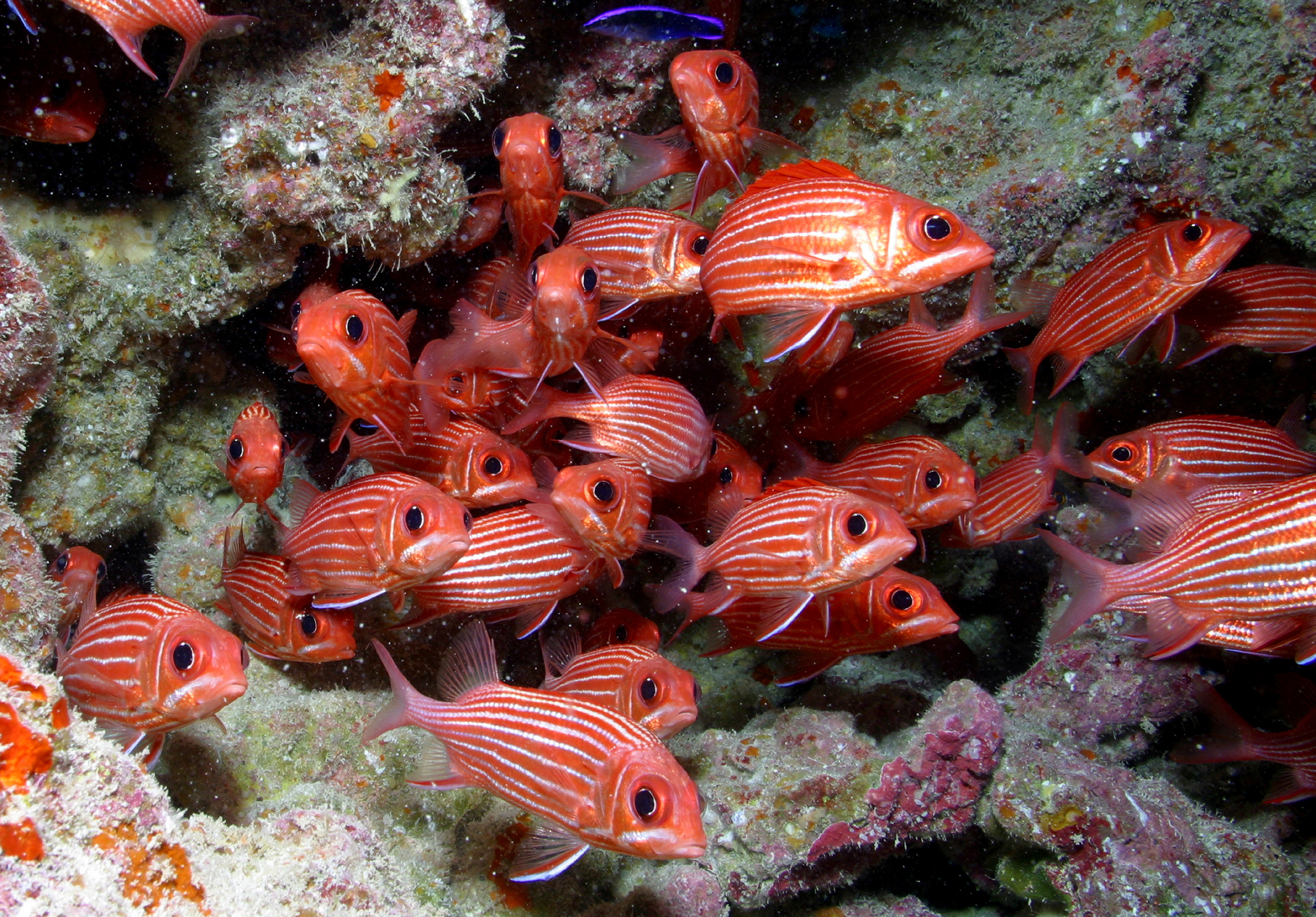 Fish species unique to Hawaii dominate deep coral reefs in ...