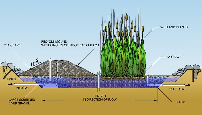 Single Artificial Wetland Successfully Treats Different
