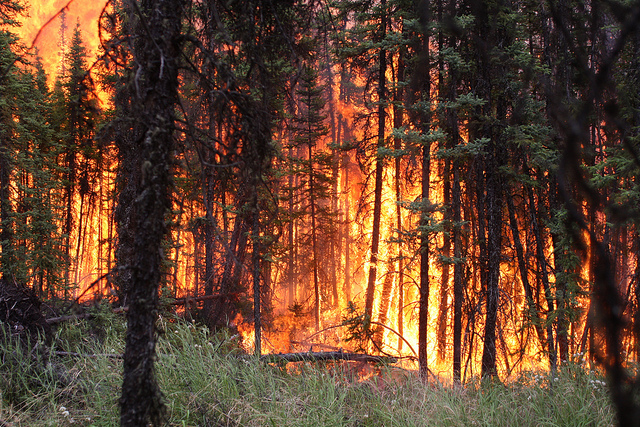 forest fires research paper Forest fire research paper forest fire research paper 161st street, west zip 10032 writing homework in kindergarten edit my dissertation abstract on literature for 10 write my course work on.
