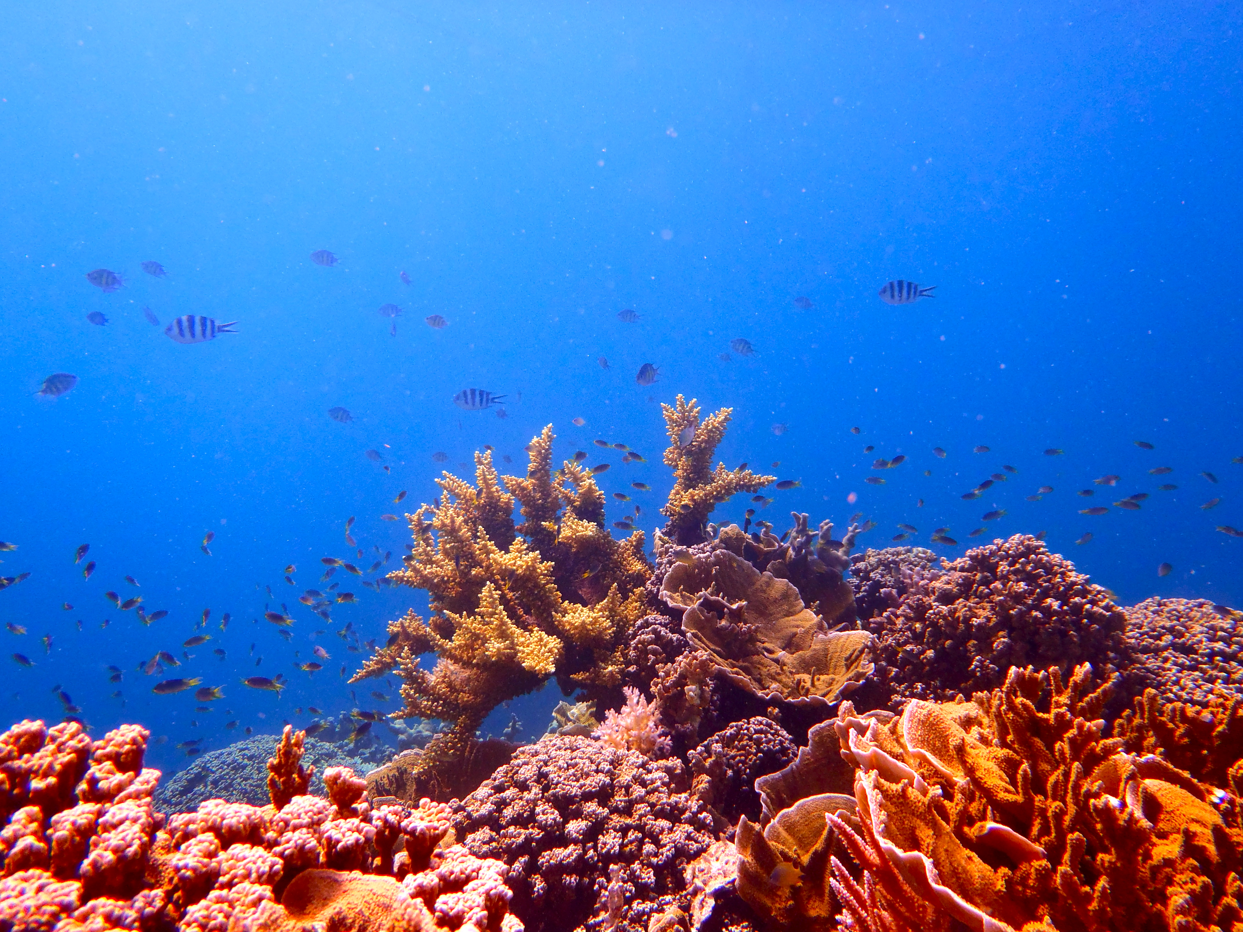 Diverse coral communities persist, but bioerosion escalates in