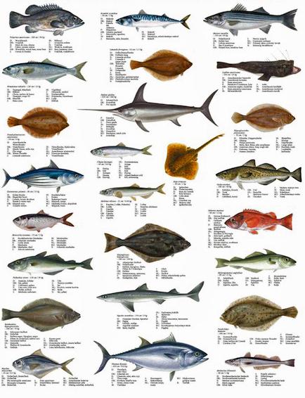 List Freshwater Fish Species Long Island