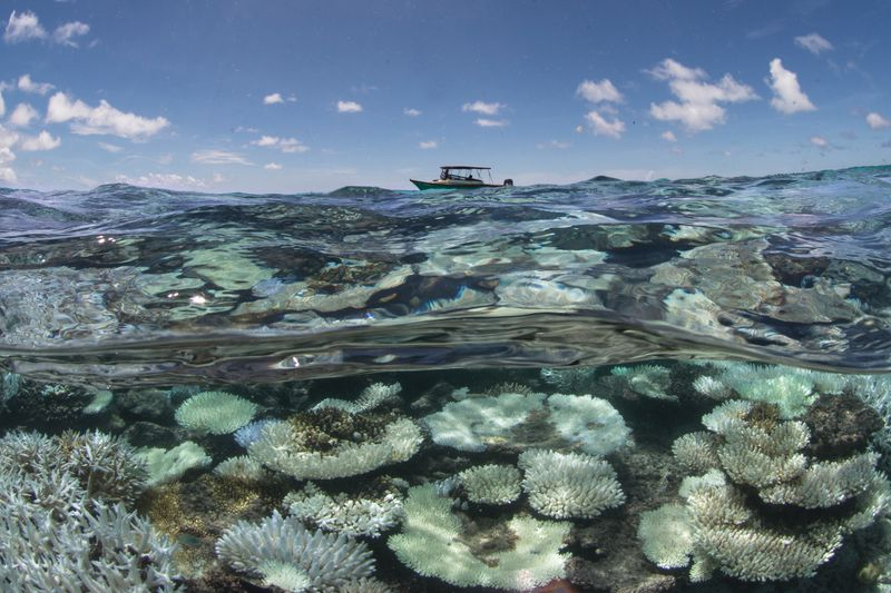 001-Coral-Bleaching-in-the-Maldives