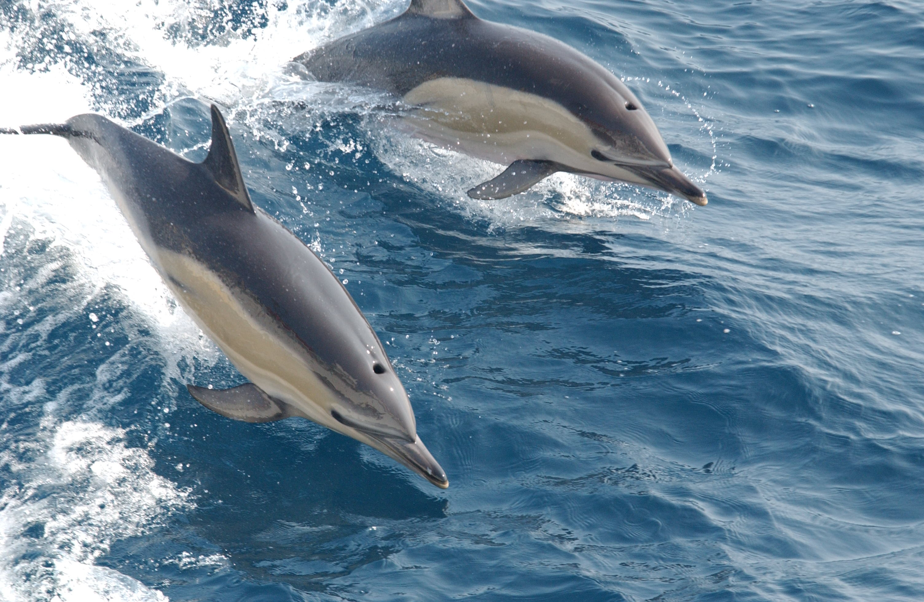 Constantine Alexander\'s Journal: Whale & Dolphin News from Around ...