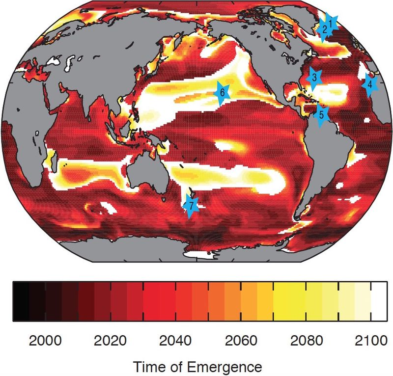 Ocean-carbon sink map