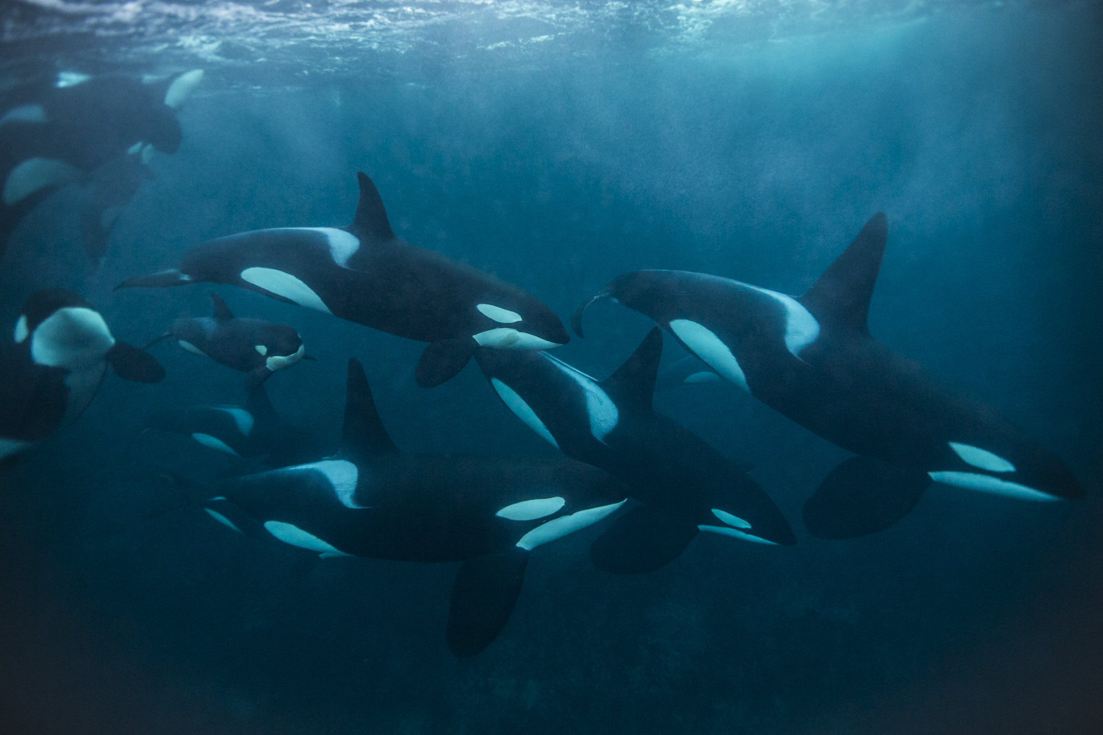 Constantine Alexander's Journal: Whale & Dolphin News from