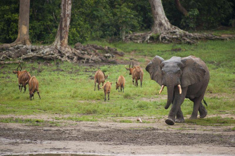 Image result for Andre Felix National Park