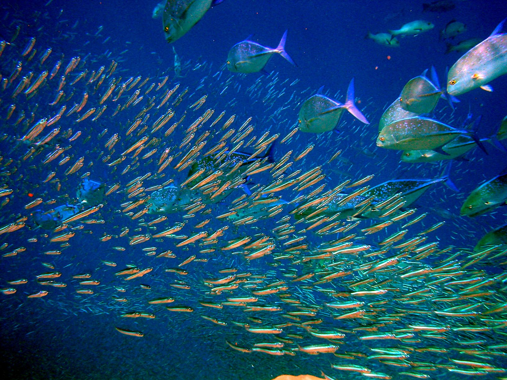 baby fish will be lost at sea in acidified oceans constantine