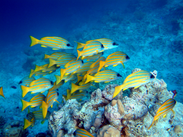 Climate Change Impairs Survival Instincts Of Fish And Can